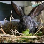 Kaninchen10