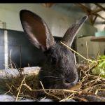 Kaninchen11