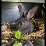 Kaninchen7
