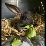 Kaninchen9